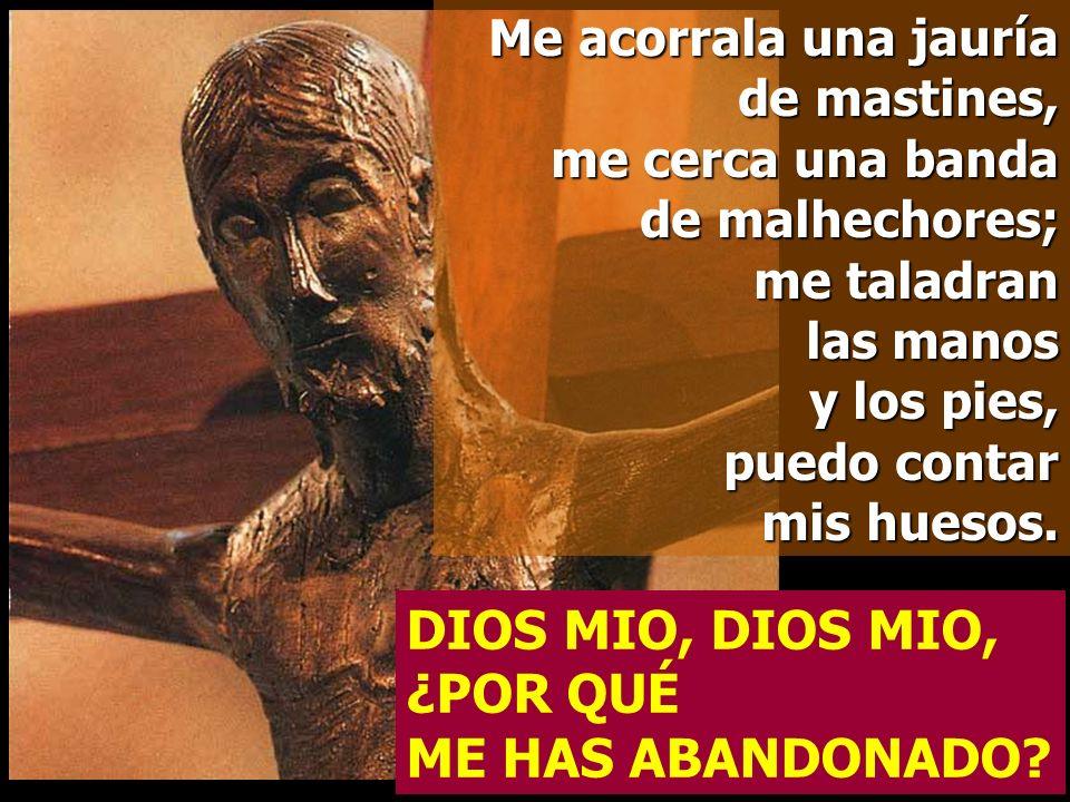Al verme, se burlan de mí, hacen visajes, menean la cabeza: Acudió al Señor, que le ponga a salvo; que lo libre, si tanto lo quiere. DIOS MIO, DIOS MI