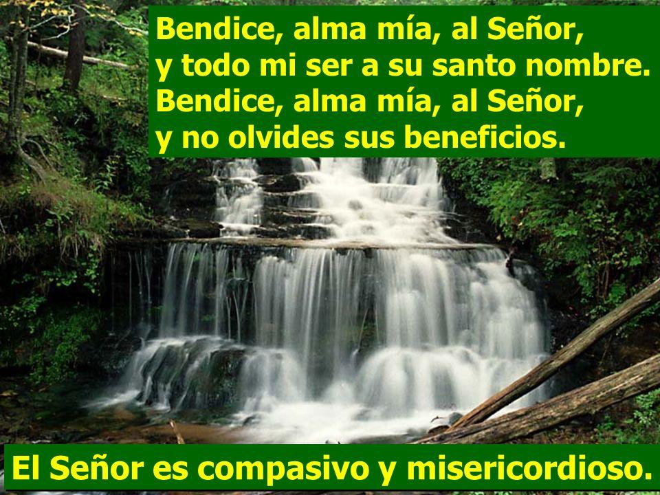 El Señor es compasivo y misericordioso. Salmo 102