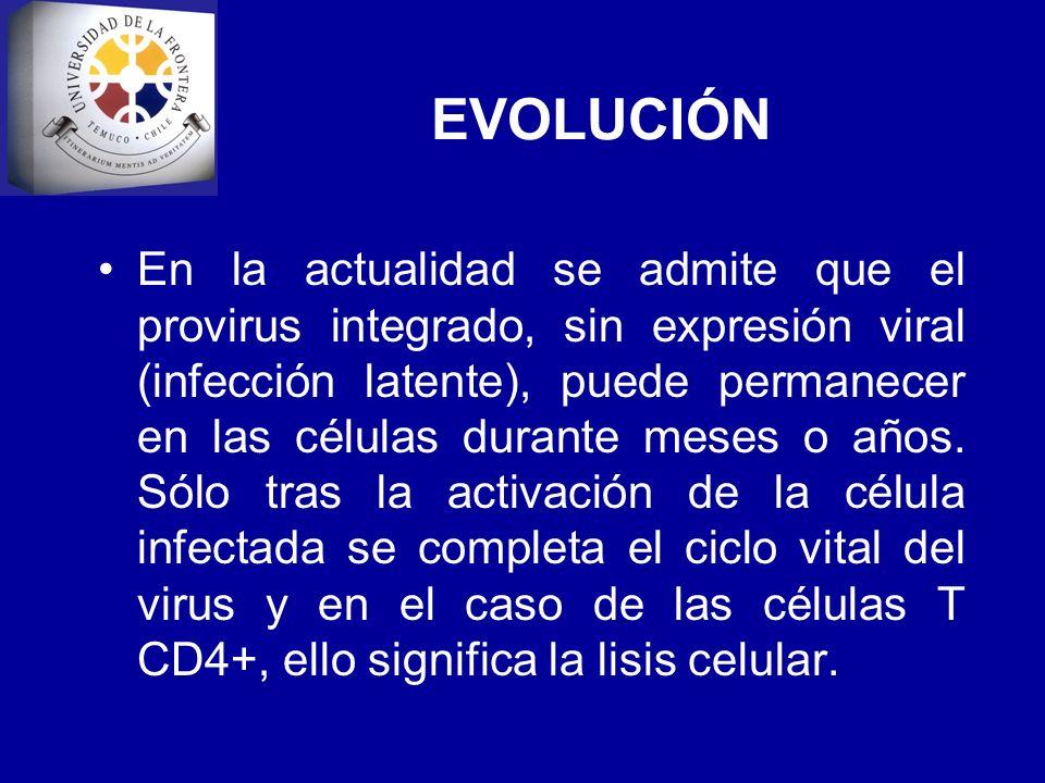 EVOLUCIÓN En la actualidad se admite que el provirus integrado, sin expresión viral (infección latente), puede permanecer en las células durante meses