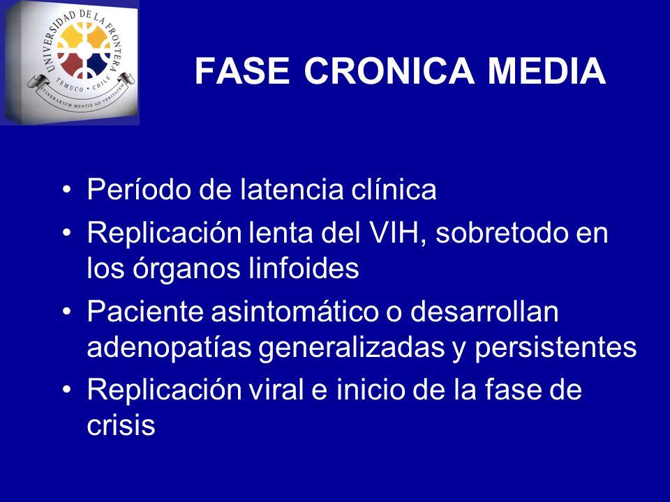 FASE CRONICA MEDIA Período de latencia clínica Replicación lenta del VIH, sobretodo en los órganos linfoides Paciente asintomático o desarrollan adeno
