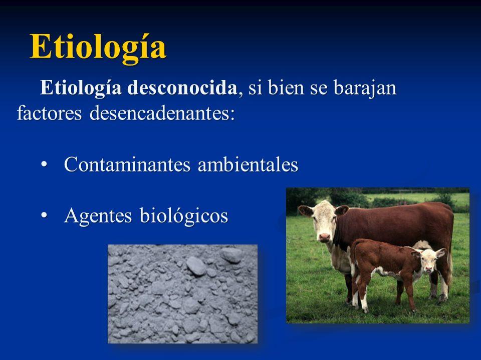 Etiología Etiología desconocida, si bien se barajan factores desencadenantes: Contaminantes ambientalesContaminantes ambientales Agentes biológicosAge