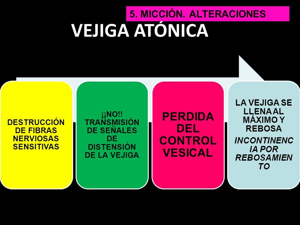 VEJIGA ATÓNICA DESTRUCCIÓN DE FIBRAS NERVIOSAS SENSITIVAS ¡¡NO!! TRANSMISIÓN DE SEÑALES DE DISTENSIÓN DE LA VEJIGA PERDIDA DEL CONTROL VESICAL LA VEJI