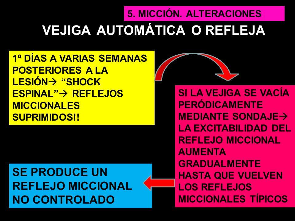VEJIGA AUTOMÁTICA O REFLEJA 1º DÍAS A VARIAS SEMANAS POSTERIORES A LA LESIÓN SHOCK ESPINAL REFLEJOS MICCIONALES SUPRIMIDOS!! SI LA VEJIGA SE VACÍA PER
