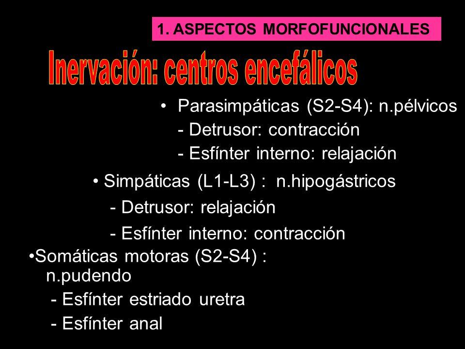 1.ASPECTOS MORFOFUNCIONALES - Protuberancia (+,-) - Corteza cerebral (-,+) … Estimulan o inhiben a través de la médula espinal el reflejo de la micción.