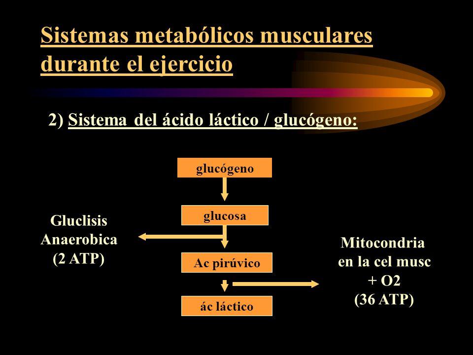 METABOLISMO ANAERÓBICO LÁCTICO GLUCOSA+ 2 ADP +2P 2 AC. LÁCTICO + 2 ATP