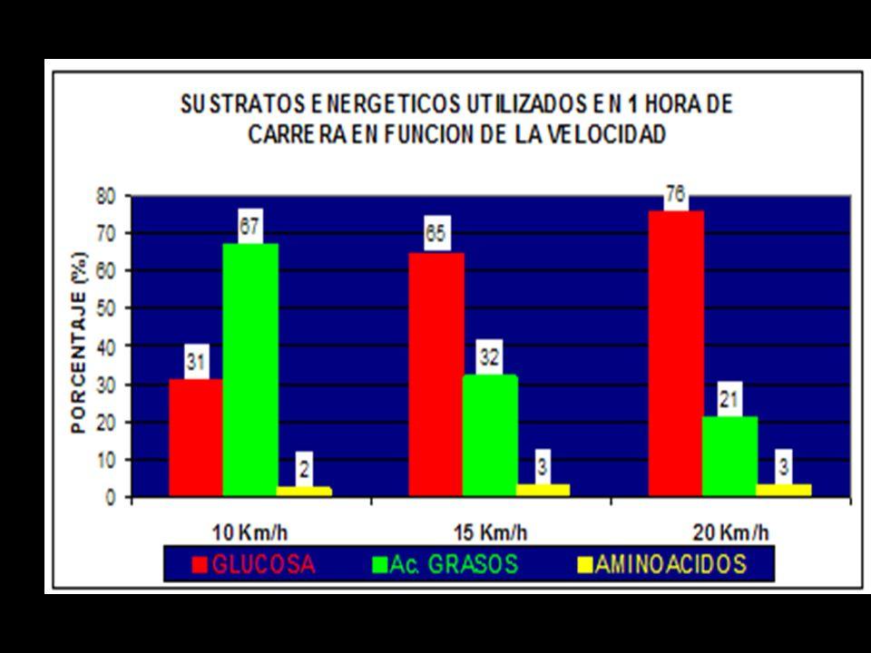 Sistemas metabólicos musculares durante el ejercicio Velocidades relativas maximas de generación de energía sistema moles de ATP / minuto Sistema aerobio-----------------------1 (ilimitado c/O 2 sufic) Sist glucog-ac lact--------------------2.5 (durante 1:30-2:00 min) Sist fosfageno--------------------------4 (durante 8/10 seg)