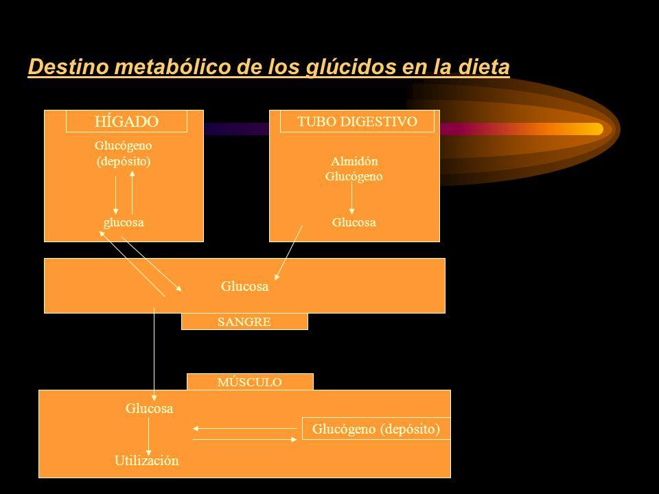 Consumo de hidratos de carbono según la intensidad del ejercicio TIPO DE EJERCICIOINTENSIDADVCO 2 /VO 2 AC.