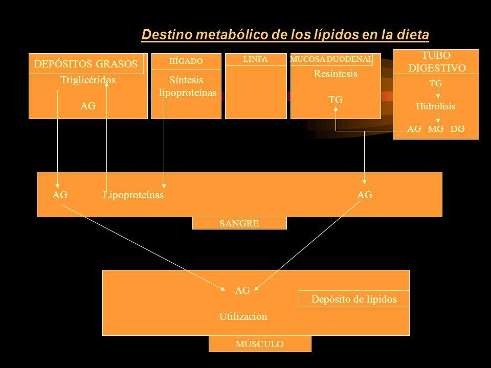 Almacenamiento de los lípidos GRASAS DE LA DIETA EXCESOS DE HIDRATOS DE C.