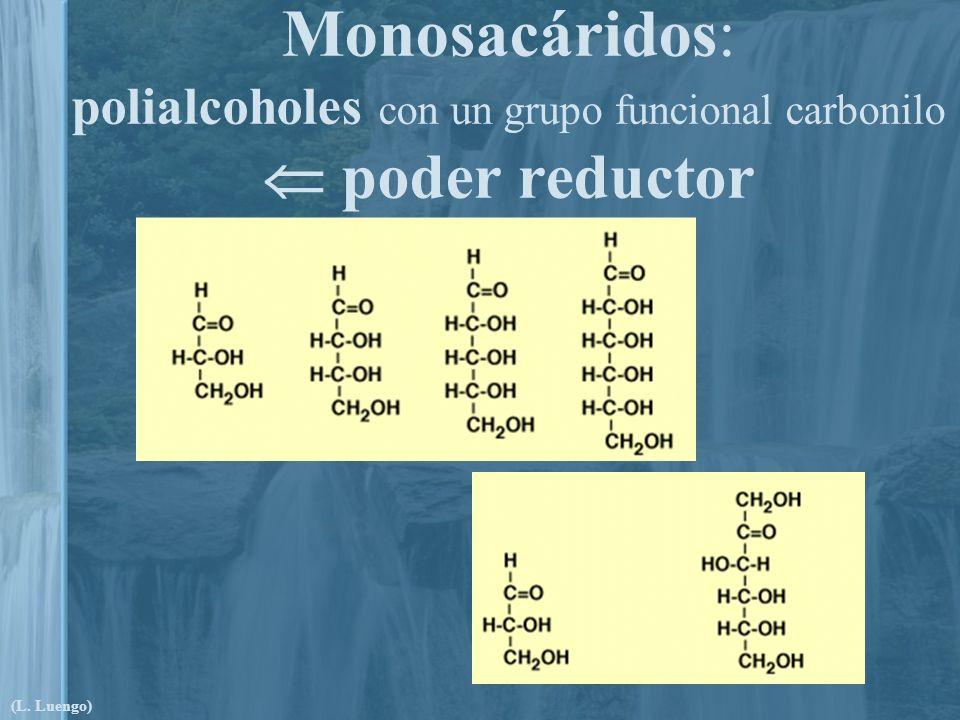 Monosacáridos: polialcoholes con un grupo funcional carbonilo poder reductor (L. Luengo)