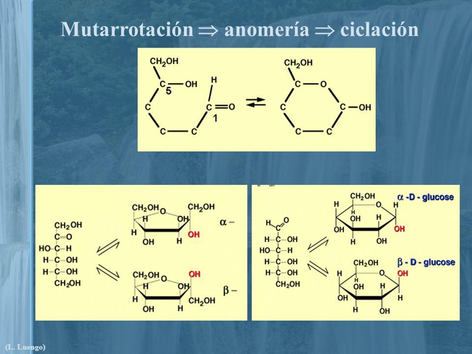 Mutarrotación anomería ciclación (L. Luengo)