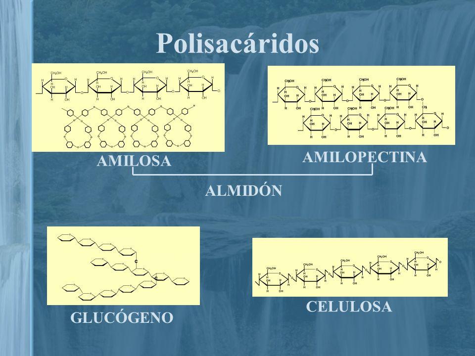 Hidrolizables.Cadenas largas; macromoléculas.