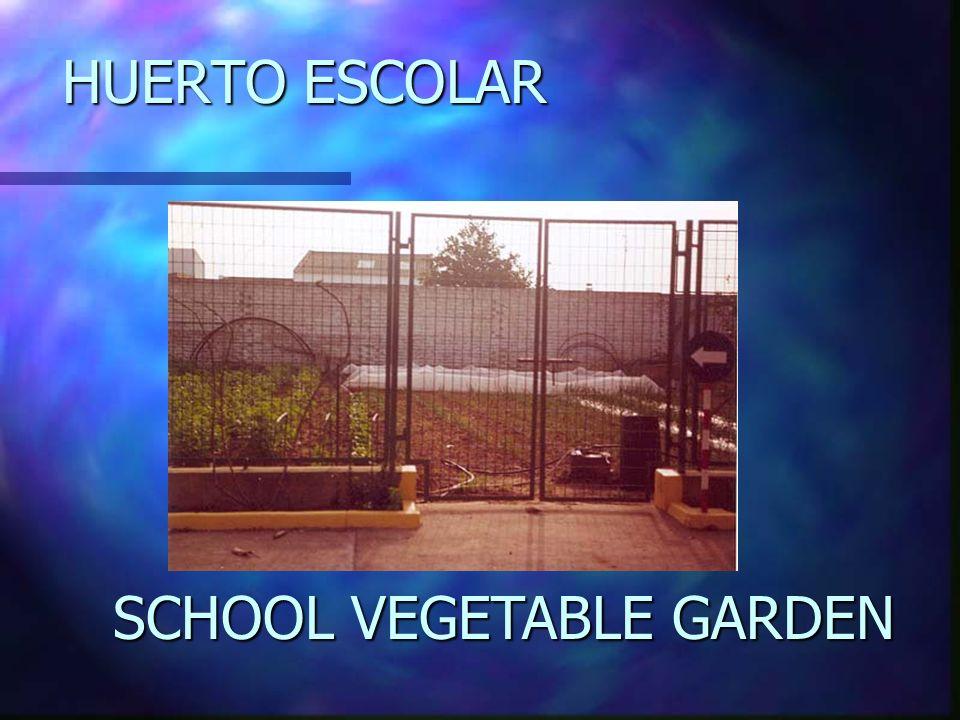 HUERTO ESCOLAR SCHOOL VEGETABLE GARDEN
