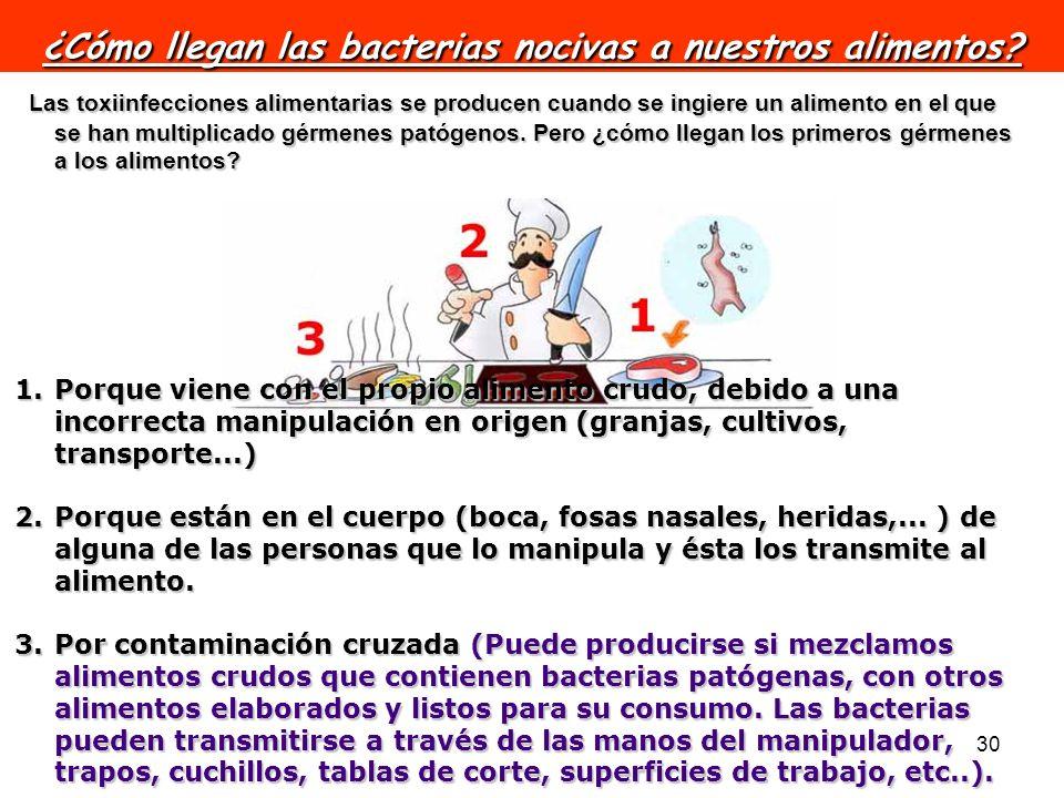 30 ¿Cómo llegan las bacterias nocivas a nuestros alimentos? Las toxiinfecciones alimentarias se producen cuando se ingiere un alimento en el que se ha