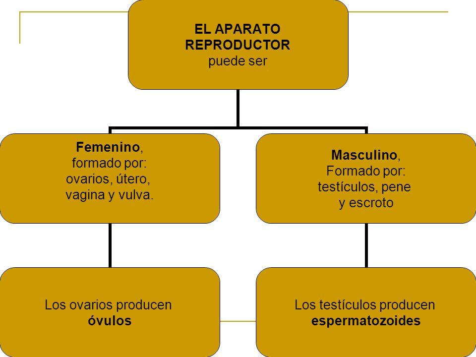 EL APARATO REPRODUCTOR puede ser Femenino, formado por: ovarios, útero, vagina y vulva. Los ovarios producen óvulos Masculino, Formado por: testículos