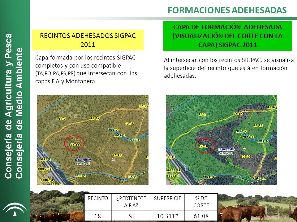 FORMACIONES ADEHESADAS Consejería de Agricultura y Pesca Consejería de Medio Ambiente RECINTOS ADEHESADOS SIGPAC 2011 CAPA DE FORMACIÓN ADEHESADA (VISUALIZACIÓN DEL CORTE CON LA CAPA) SIGPAC 2011 Capa formada por los recintos SIGPAC completos y con uso compatible ( TA,FO,PA,PS,PR ) que intersecan con las capas F.A y Montanera.