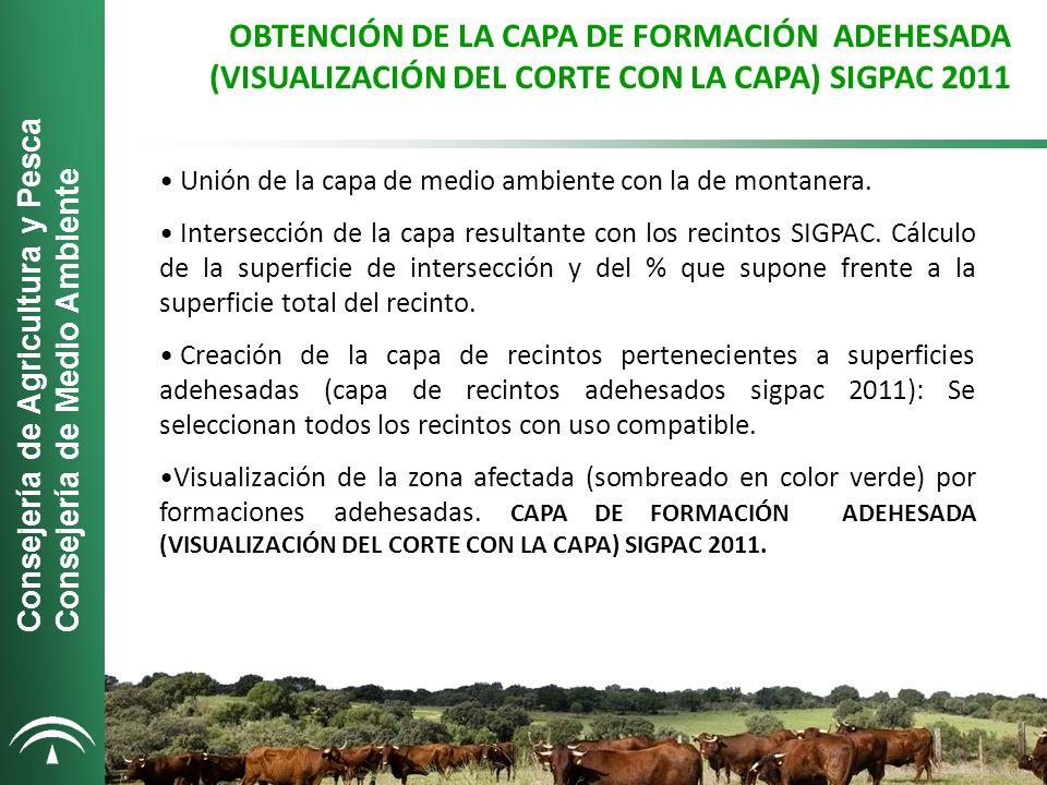 OBTENCIÓN DE LA CAPA DE FORMACIÓN ADEHESADA (VISUALIZACIÓN DEL CORTE CON LA CAPA) SIGPAC 2011 Unión de la capa de medio ambiente con la de montanera.