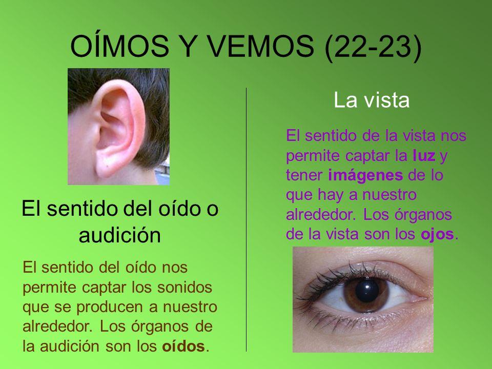 OÍMOS Y VEMOS (22-23) El sentido del oído o audición El sentido del oído nos permite captar los sonidos que se producen a nuestro alrededor. Los órgan