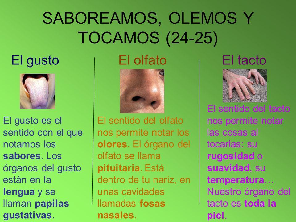 SABOREAMOS, OLEMOS Y TOCAMOS (24-25) El gusto El olfatoEl tacto El gusto es el sentido con el que notamos los sabores. Los órganos del gusto están en