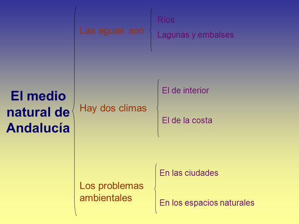 El medio natural de Andalucía Las aguas son Los problemas ambientales Hay dos climas Ríos Lagunas y embalses El de interior El de la costa En las ciud