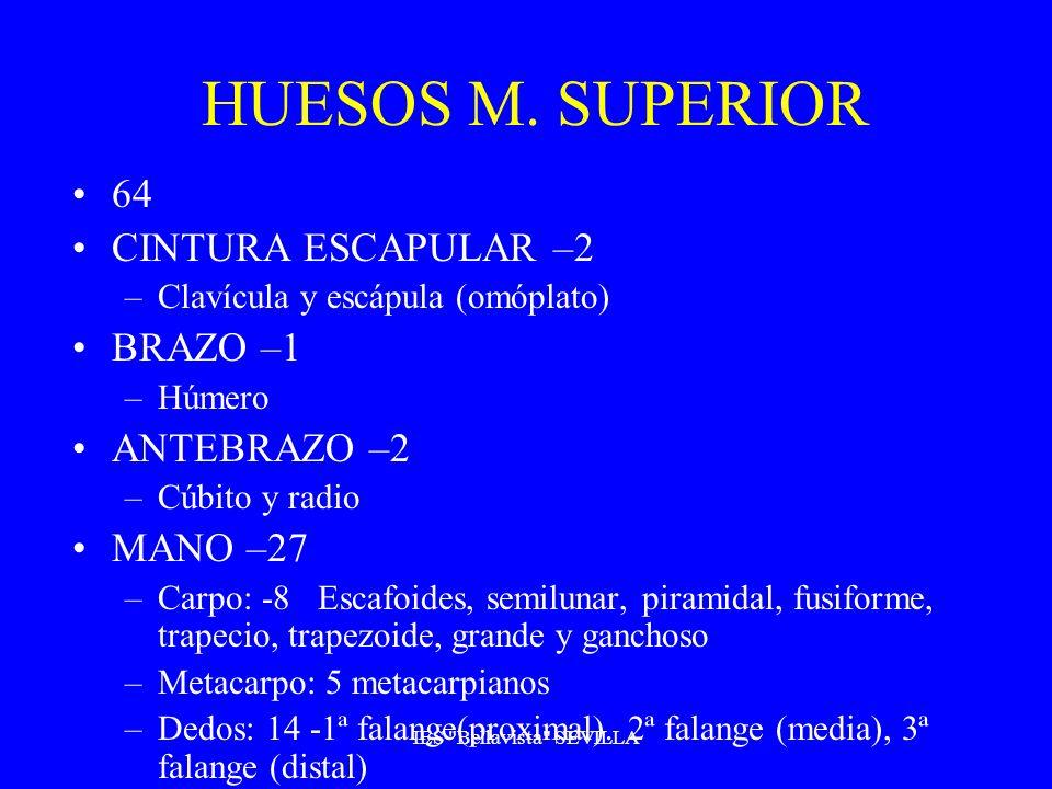 HUESOS M. SUPERIOR 64 CINTURA ESCAPULAR –2 –Clavícula y escápula (omóplato) BRAZO –1 –Húmero ANTEBRAZO –2 –Cúbito y radio MANO –27 –Carpo: -8 Escafoid