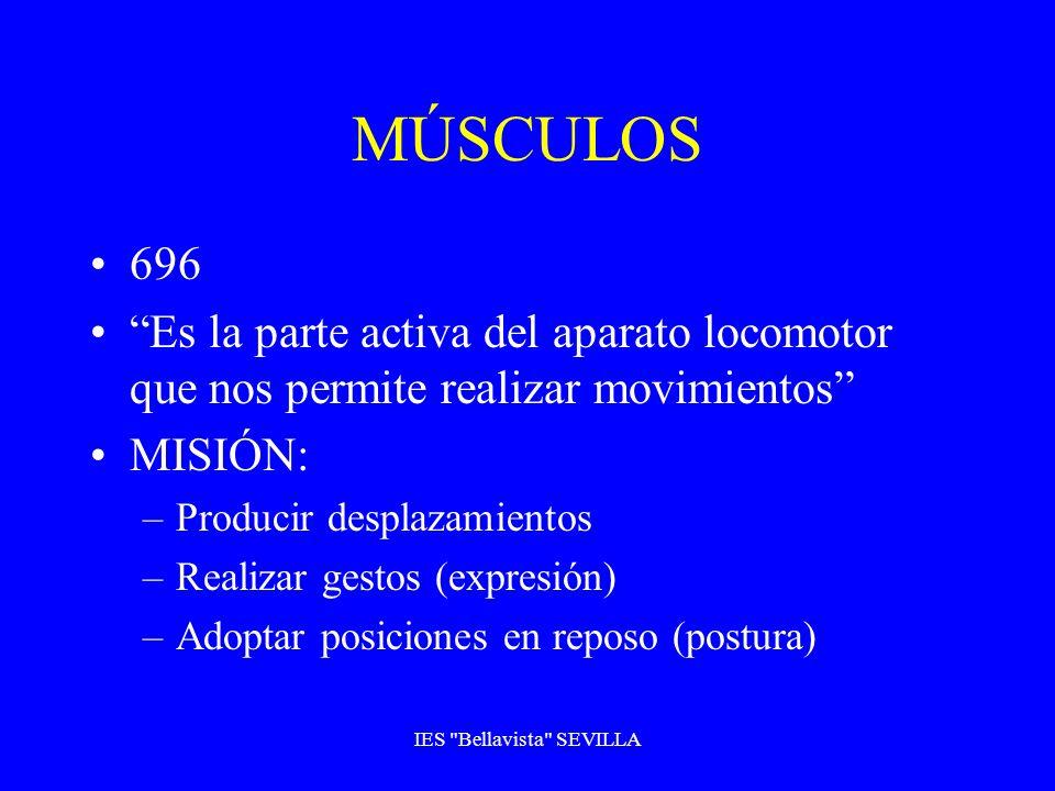 MÚSCULOS 696 Es la parte activa del aparato locomotor que nos permite realizar movimientos MISIÓN: –Producir desplazamientos –Realizar gestos (expresi