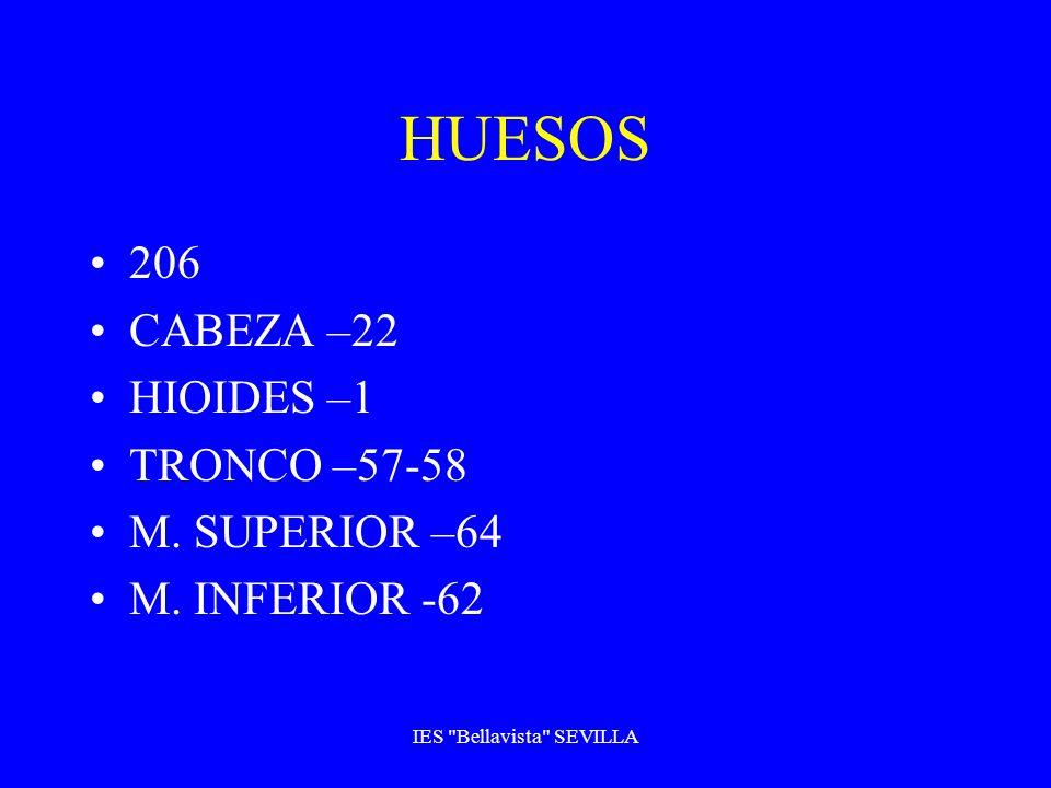 HUESOS 206 CABEZA –22 HIOIDES –1 TRONCO –57-58 M. SUPERIOR –64 M. INFERIOR -62