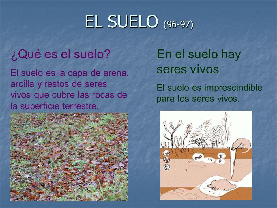 EL SUELO (96-97) ¿Qué es el suelo? El suelo es la capa de arena, arcilla y restos de seres vivos que cubre las rocas de la superficie terrestre. En el