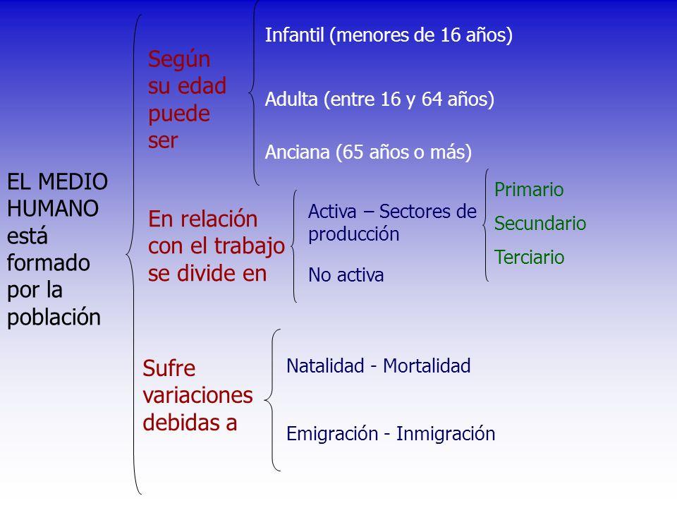 EL MEDIO HUMANO está formado por la población Según su edad puede ser Sufre variaciones debidas a Infantil (menores de 16 años) Activa – Sectores de p