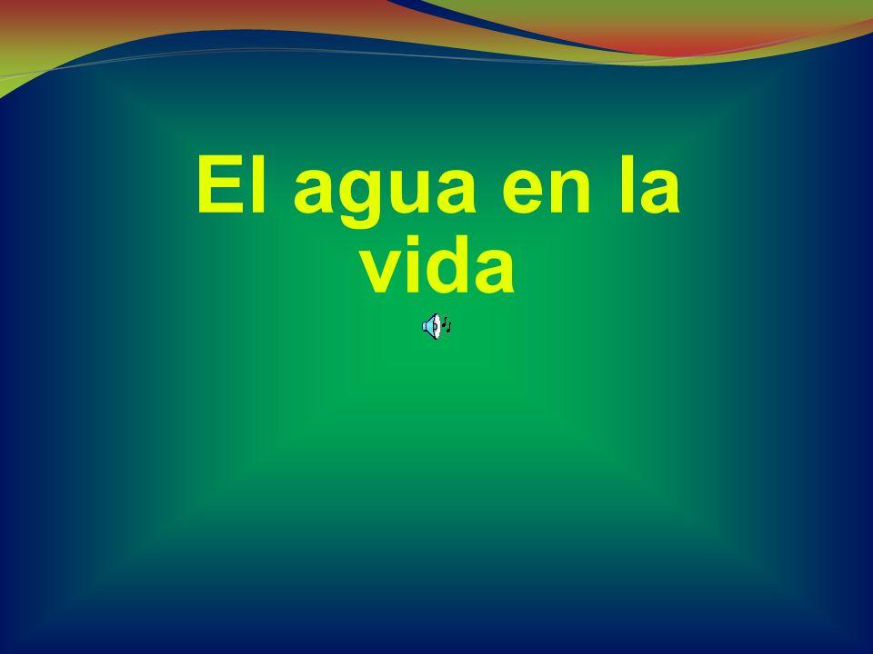 El agua en la vida