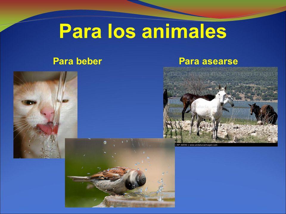 Para los animales Para beberPara asearse