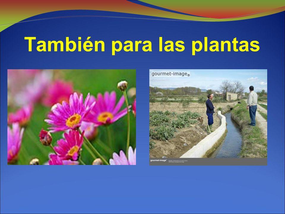 También para las plantas