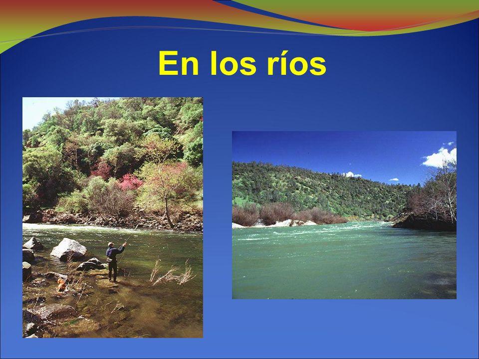 En los ríos