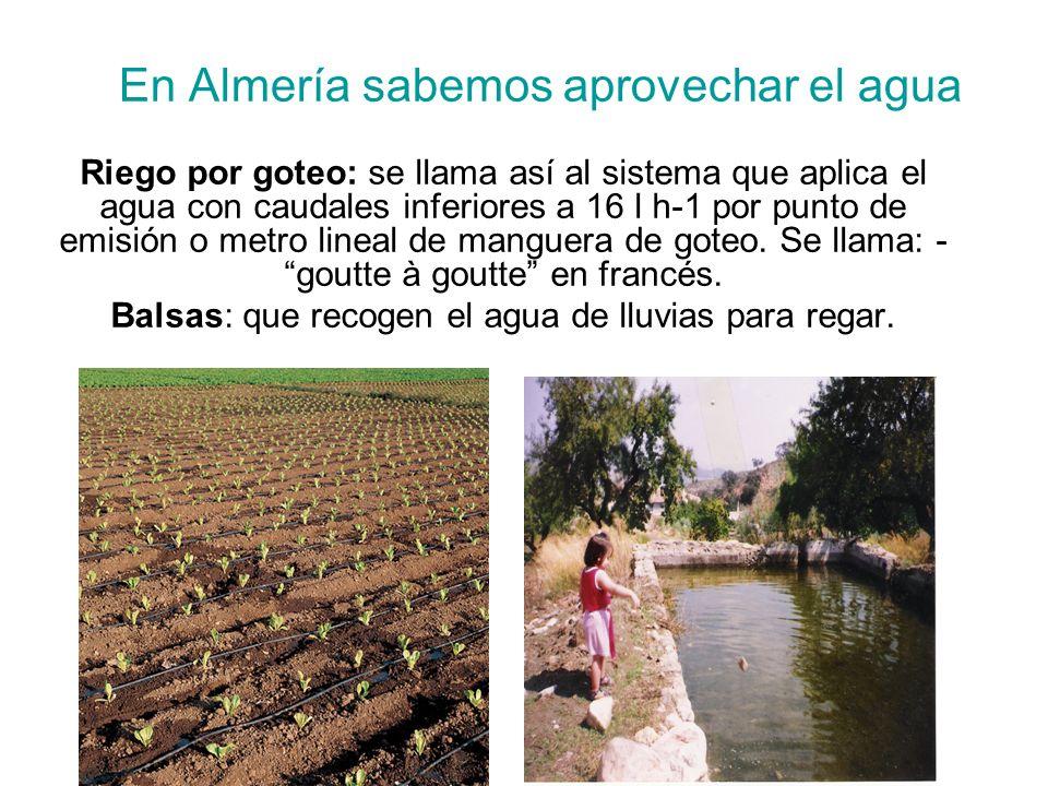 En Almería sabemos aprovechar el agua Riego por goteo: se llama así al sistema que aplica el agua con caudales inferiores a 16 l h-1 por punto de emis