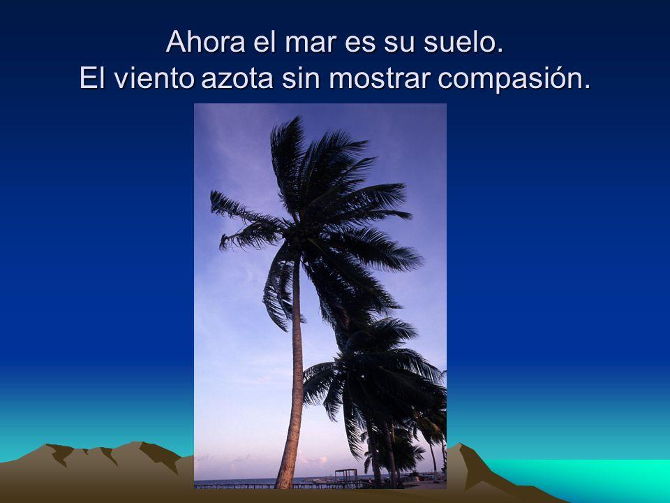 Ahora el mar es su suelo. El viento azota sin mostrar compasión.