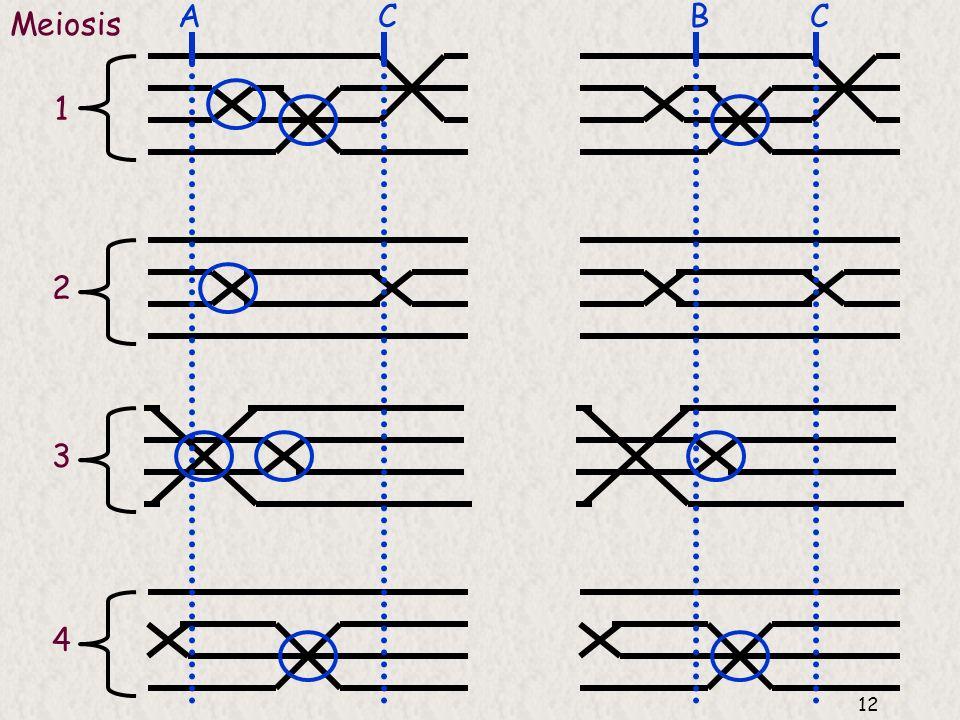 11 Supuesto: las frecuencias de entrecruzamiento, y por tanto la frecuencia de recombinación, depende de la distancia entre genes Unidad de distancia: