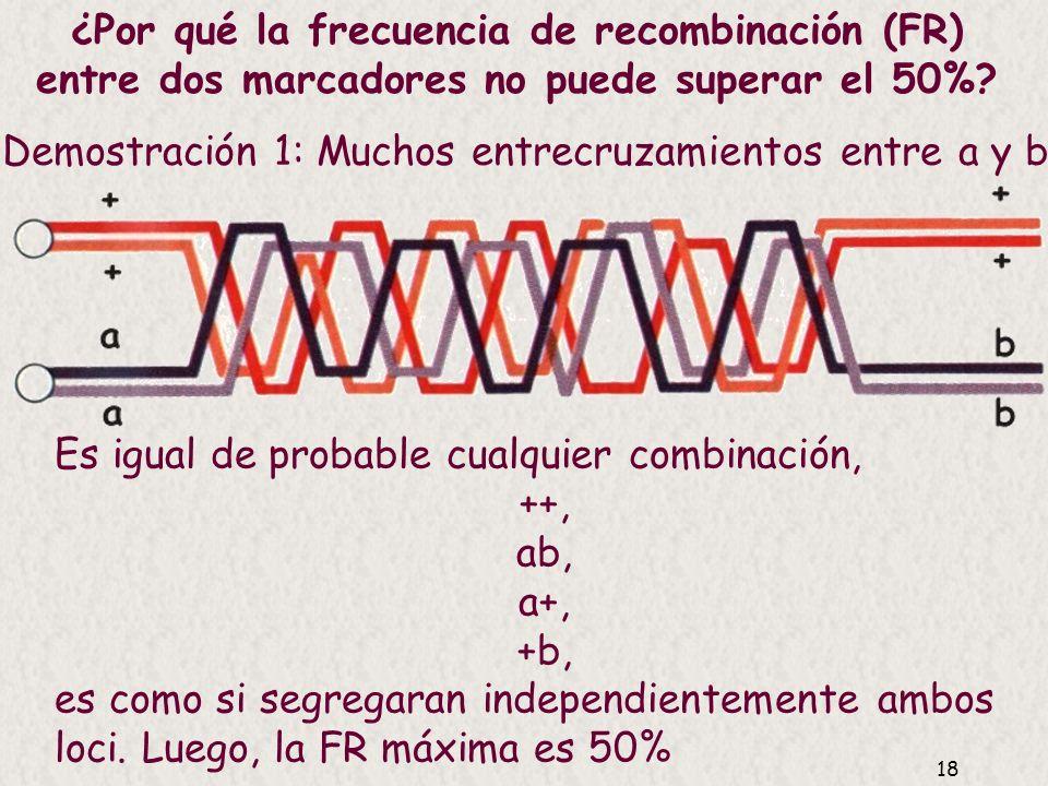 17 Relación entre frecuencia de recombinación y entrecruzamiento (o distancia real de mapa) Las distancias de mapa no son completamente aditivas porqu