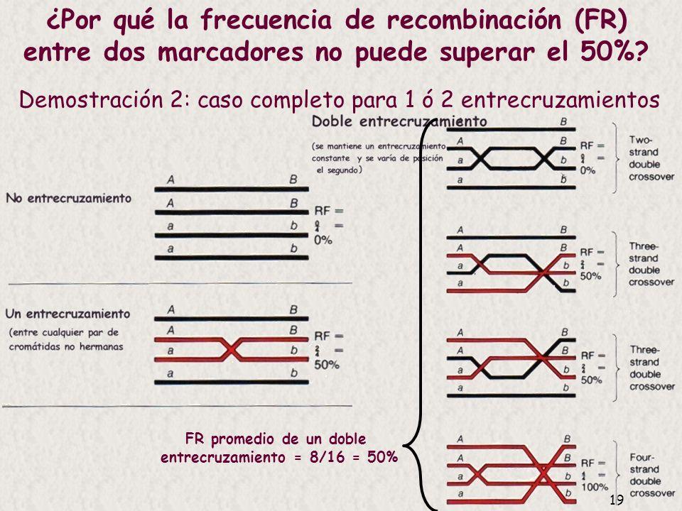 18 Demostración 1: Muchos entrecruzamientos entre a y b Es igual de probable cualquier combinación, ++, ab, a+, +b, es como si segregaran independient