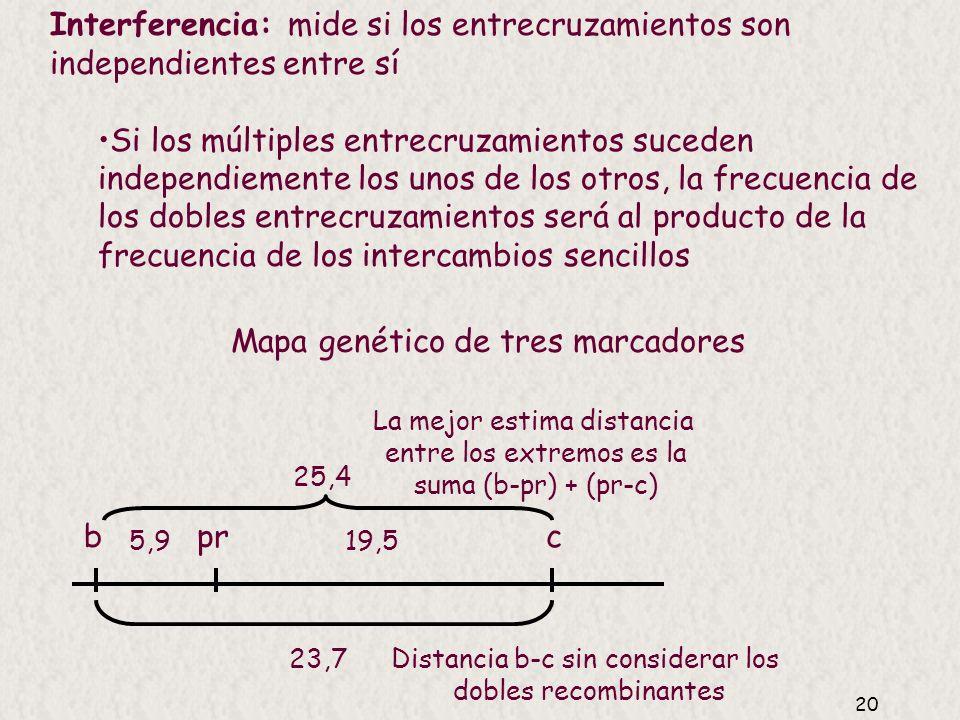 19 Demostración 2: caso completo para 1 ó 2 entrecruzamientos ¿Por qué la frecuencia de recombinación (FR) entre dos marcadores no puede superar el 50