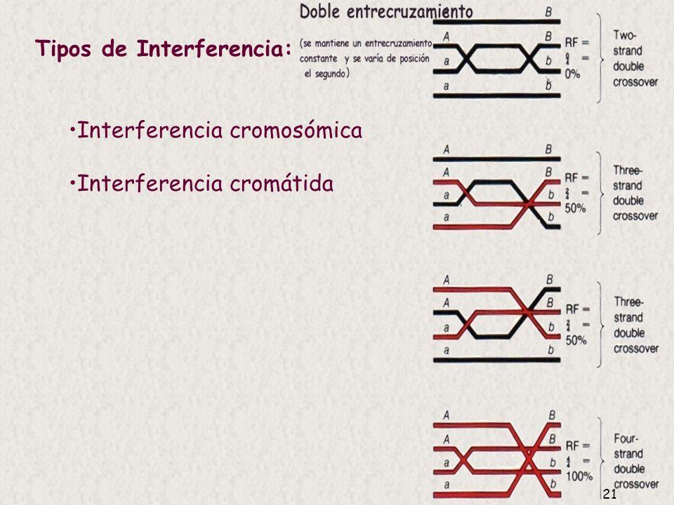 20 Interferencia: mide si los entrecruzamientos son independientes entre sí Si los múltiples entrecruzamientos suceden independiemente los unos de los