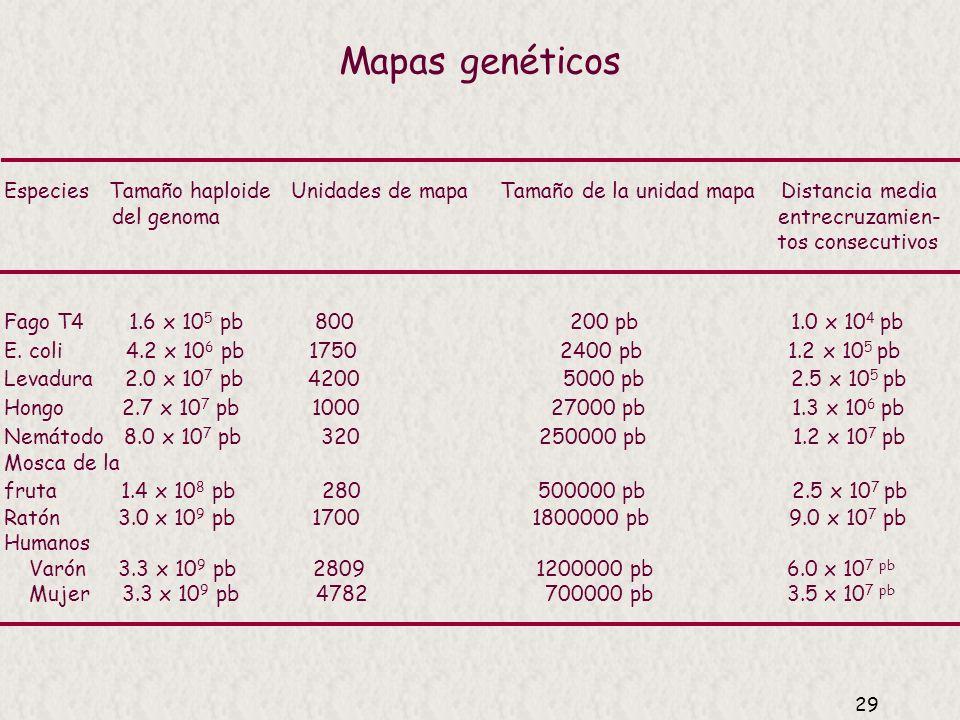 28 Grupos de ligamiento en Drosophila