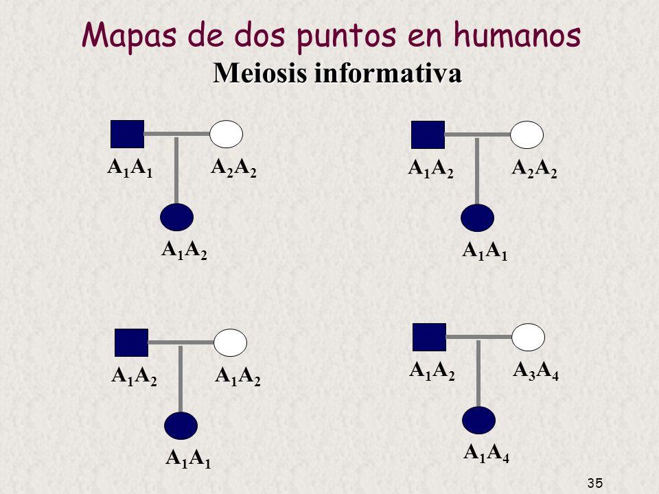 34 Mapas de dos puntos en humanos Selección y análisis de familias Evidencia de ligamiento Estima distancia
