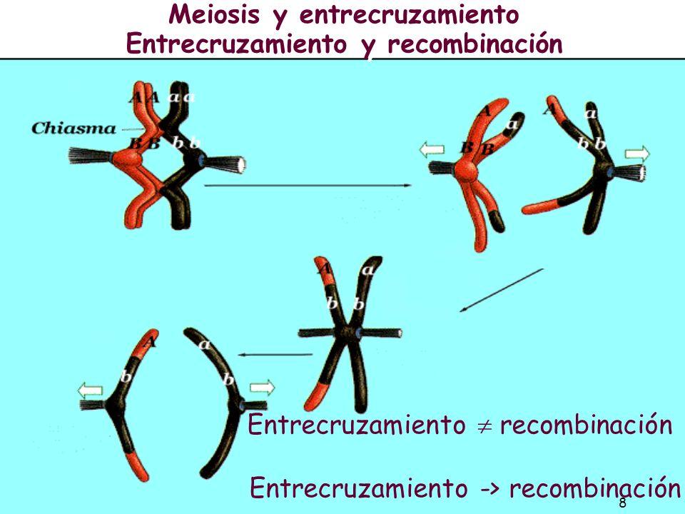 7 Entrecruzamiento (Crossover): Entrecruzamiento (Crossover): El intercambio de cromátidas no hermanas entre cromosomas homólogos durante la meiosis p