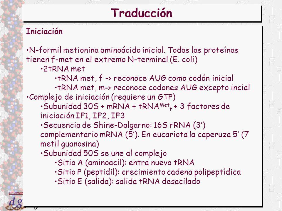 18 Dr. Antonio Barbadilla Traducción Iniciación N-formil metionina aminoácido inicial. Todas las proteínas tienen f-met en el extremo N-terminal (E. c