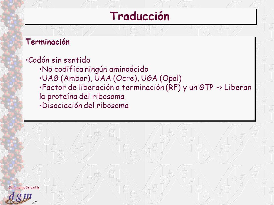 25 Dr. Antonio Barbadilla Traducción Terminación Codón sin sentido No codifica ningún aminoácido UAG (Ambar), UAA (Ocre), UGA (Opal) Factor de liberac