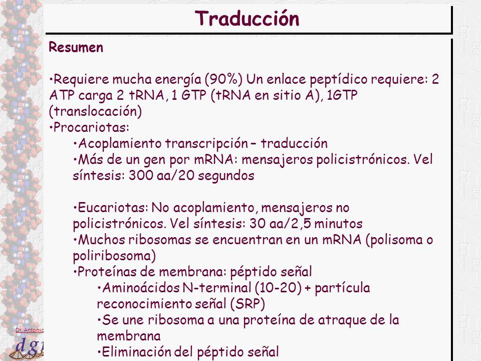 28 Dr. Antonio Barbadilla Resumen Requiere mucha energía (90%) Un enlace peptídico requiere: 2 ATP carga 2 tRNA, 1 GTP (tRNA en sitio A), 1GTP (transl