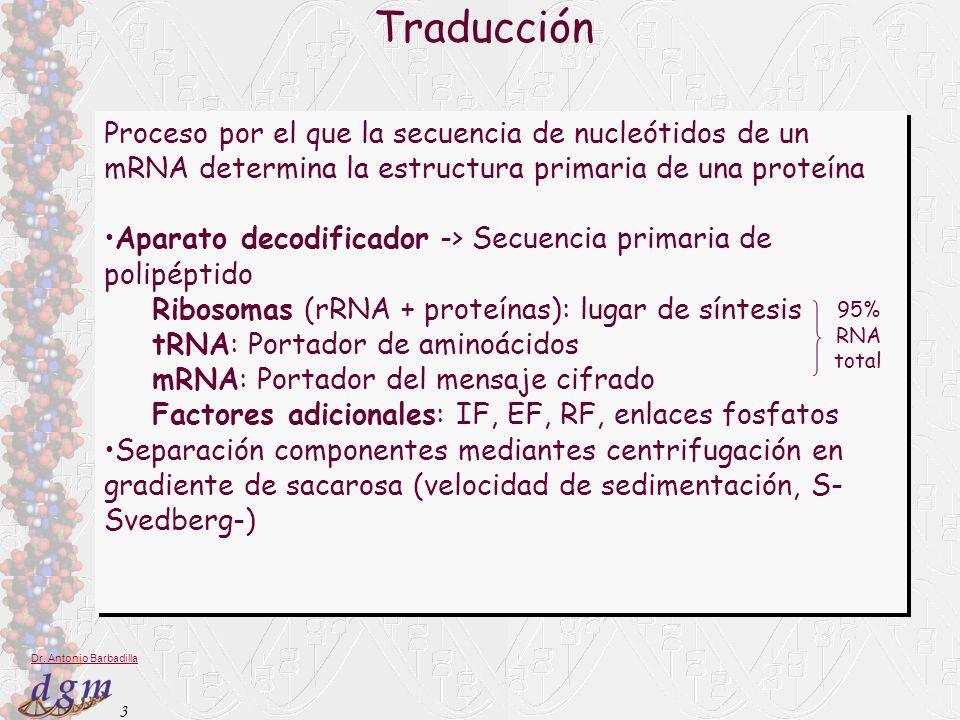 3 Dr. Antonio Barbadilla Traducción Proceso por el que la secuencia de nucleótidos de un mRNA determina la estructura primaria de una proteína Aparato