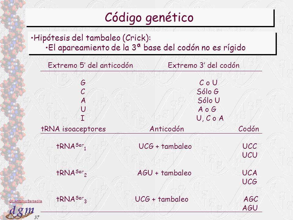37 Dr. Antonio Barbadilla Código genético Hipótesis del tambaleo (Crick): El apareamiento de la 3ª base del codón no es rígido Hipótesis del tambaleo