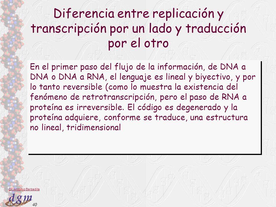 40 Dr. Antonio Barbadilla Diferencia entre replicación y transcripción por un lado y traducción por el otro En el primer paso del flujo de la informac
