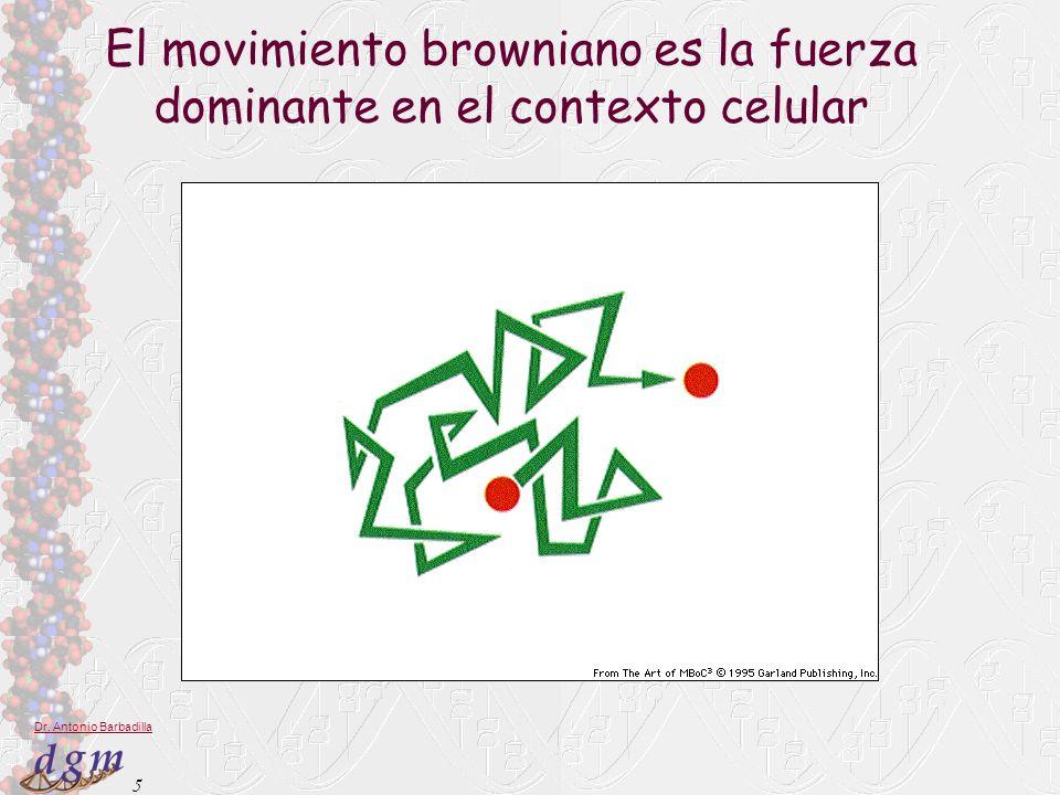 5 Dr. Antonio Barbadilla El movimiento browniano es la fuerza dominante en el contexto celular