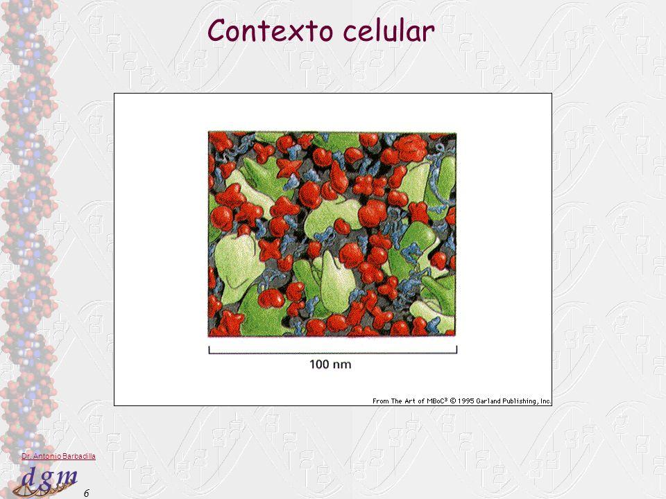 6 Dr. Antonio Barbadilla Contexto celular